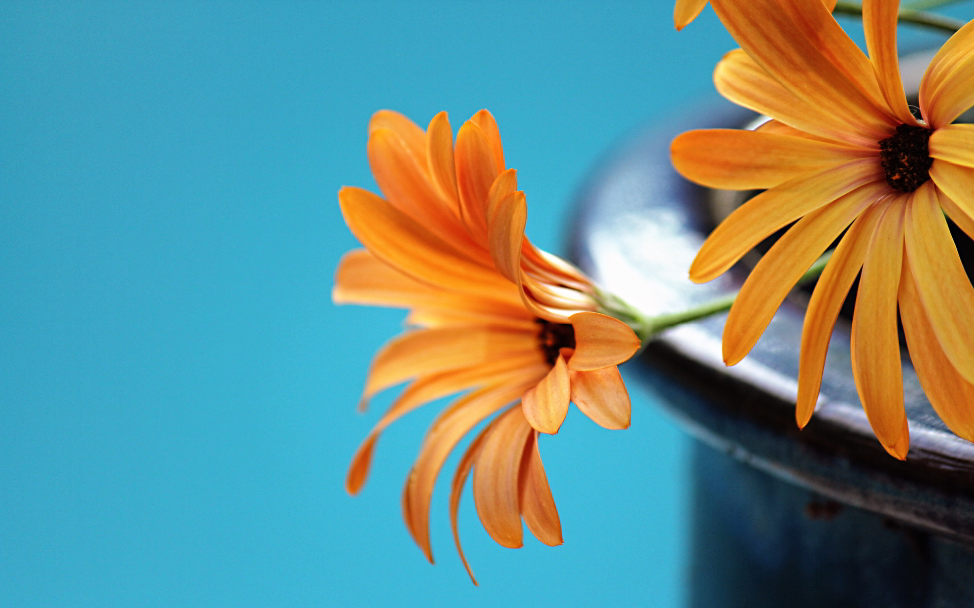 free orange flowers wallpaper 19345