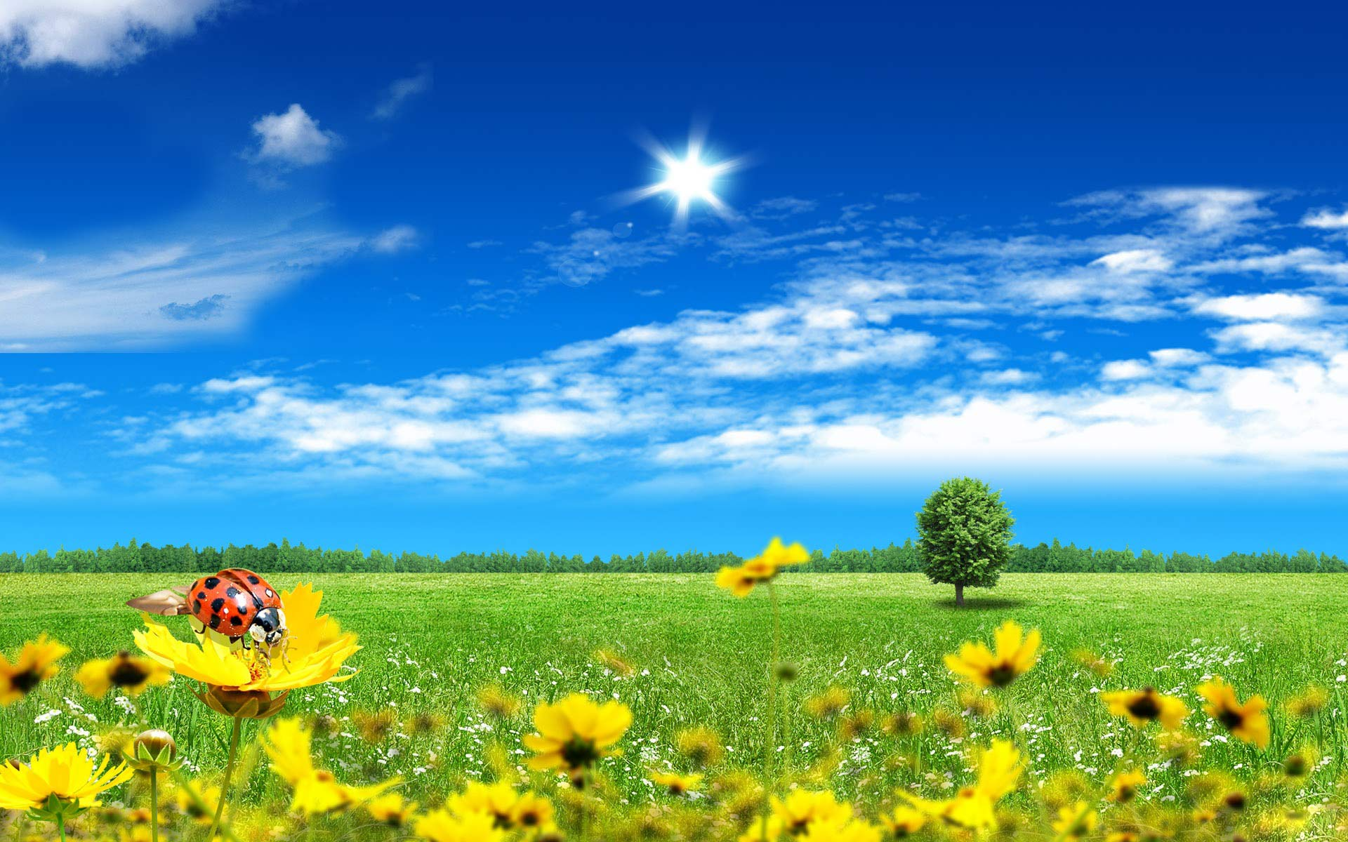 free summer wallpaper 5278