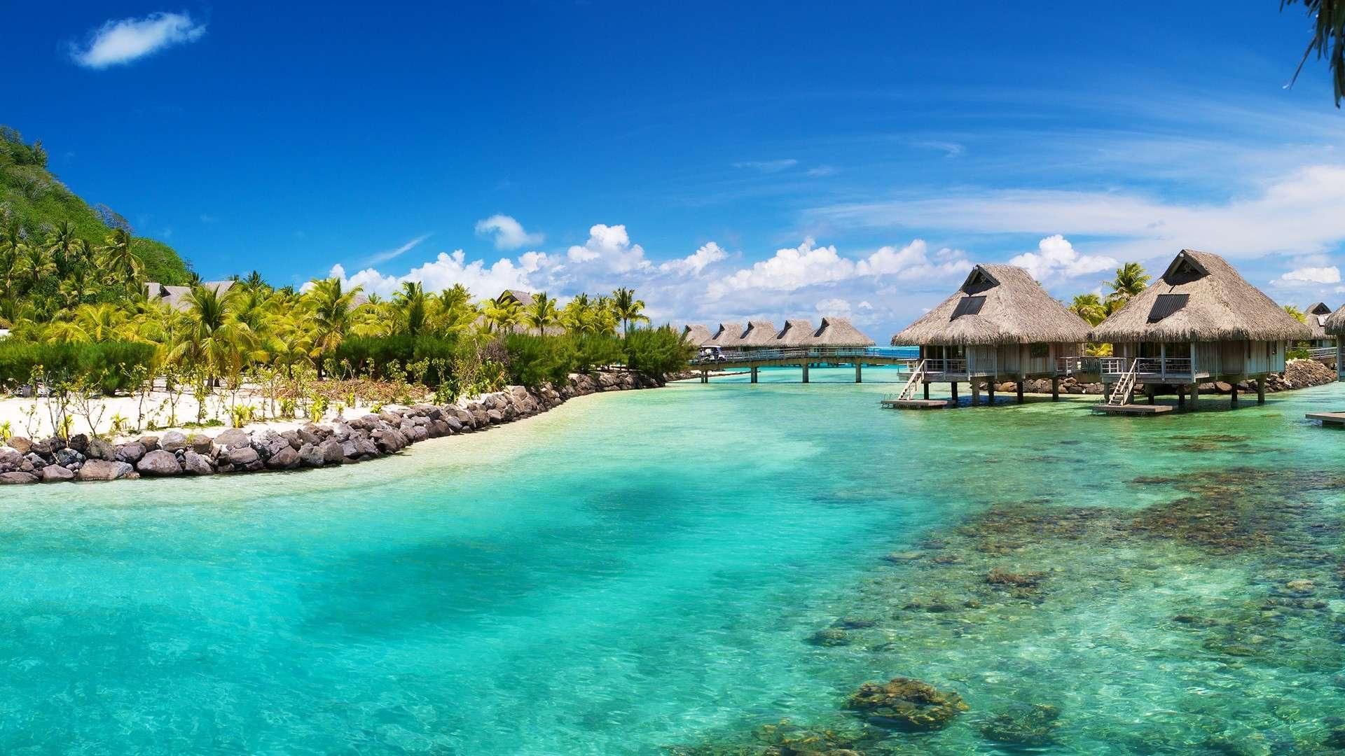 free tropical wallpaper 25217