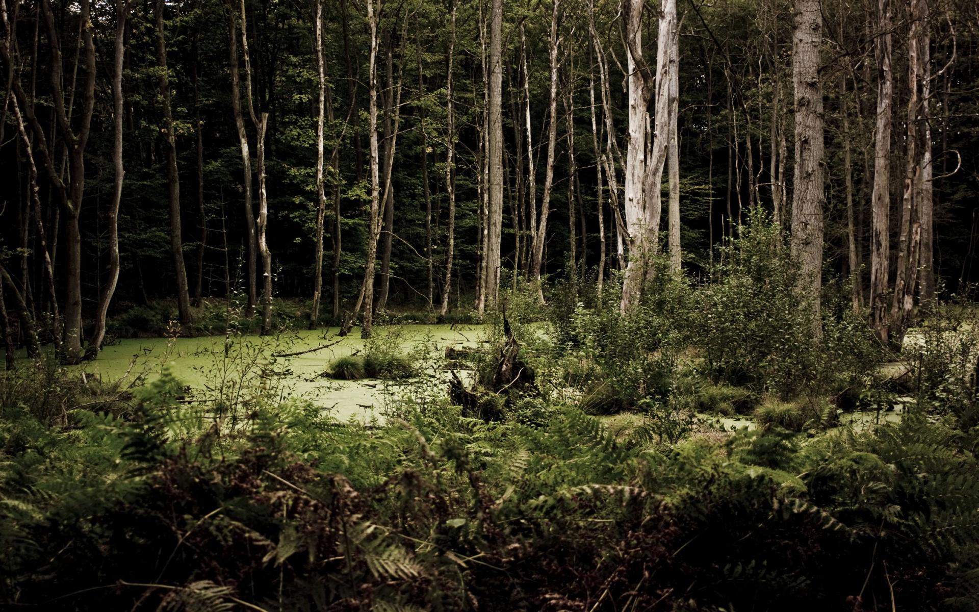 free woods background 20382