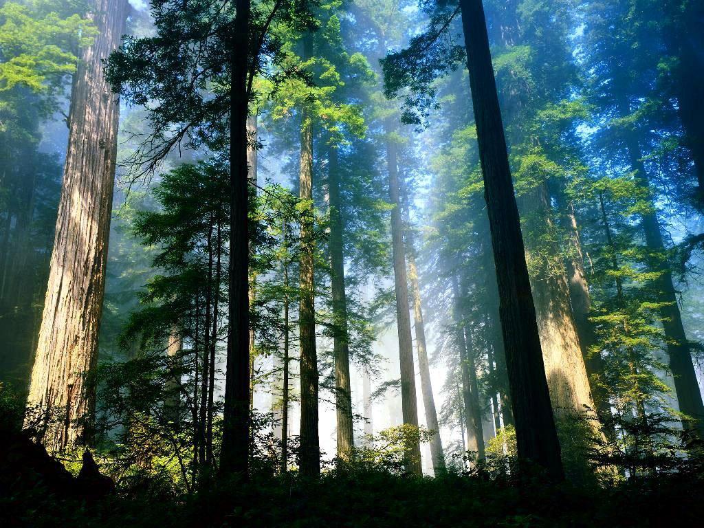 free woods wallpaper 20374