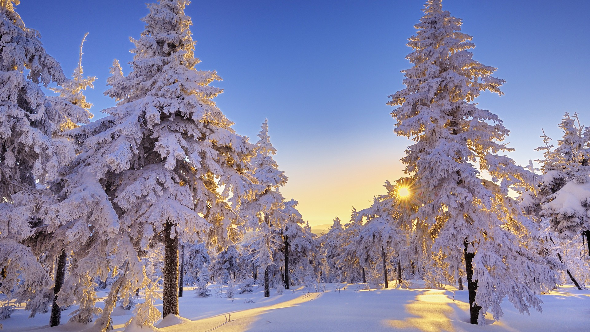 gorgeous winter snow wallpaper 44338