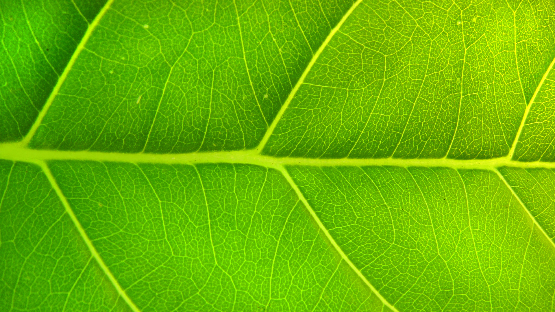 Green 27780 1920x1080 Px ~ HDWallSource.com