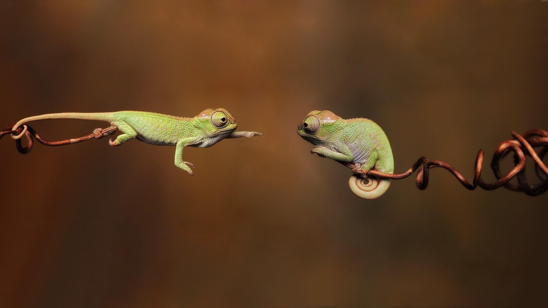 Green Lizard Wallpaper 21417 1920x1080 px HDWallSourcecom