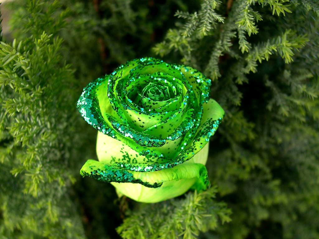 green roses 31377