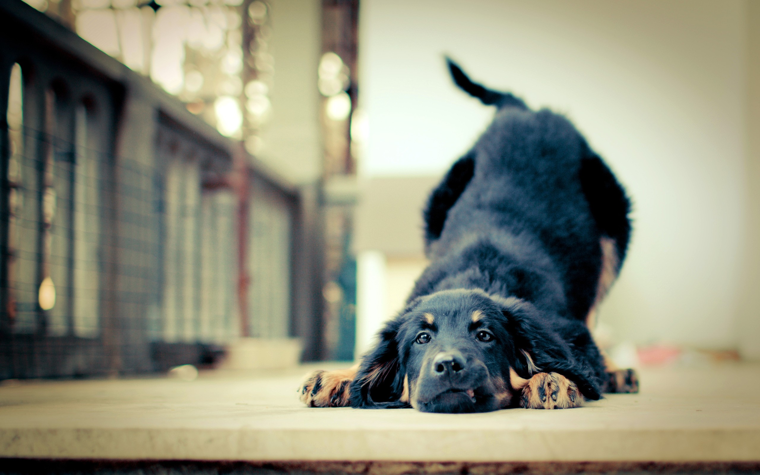 happy dog background 39358 2560x1600 px ~ hdwallsource