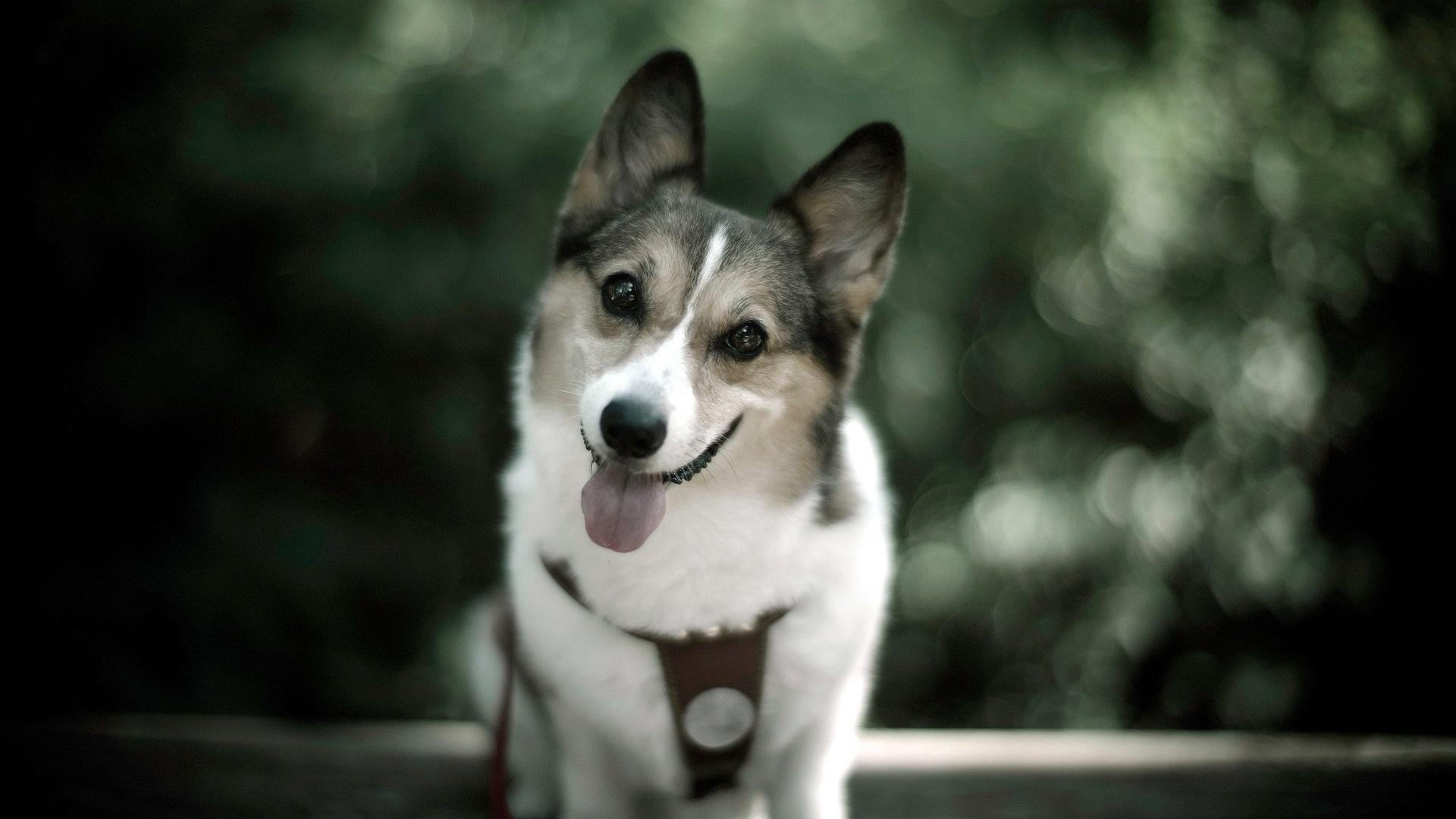 happy dog wallpaper 39353
