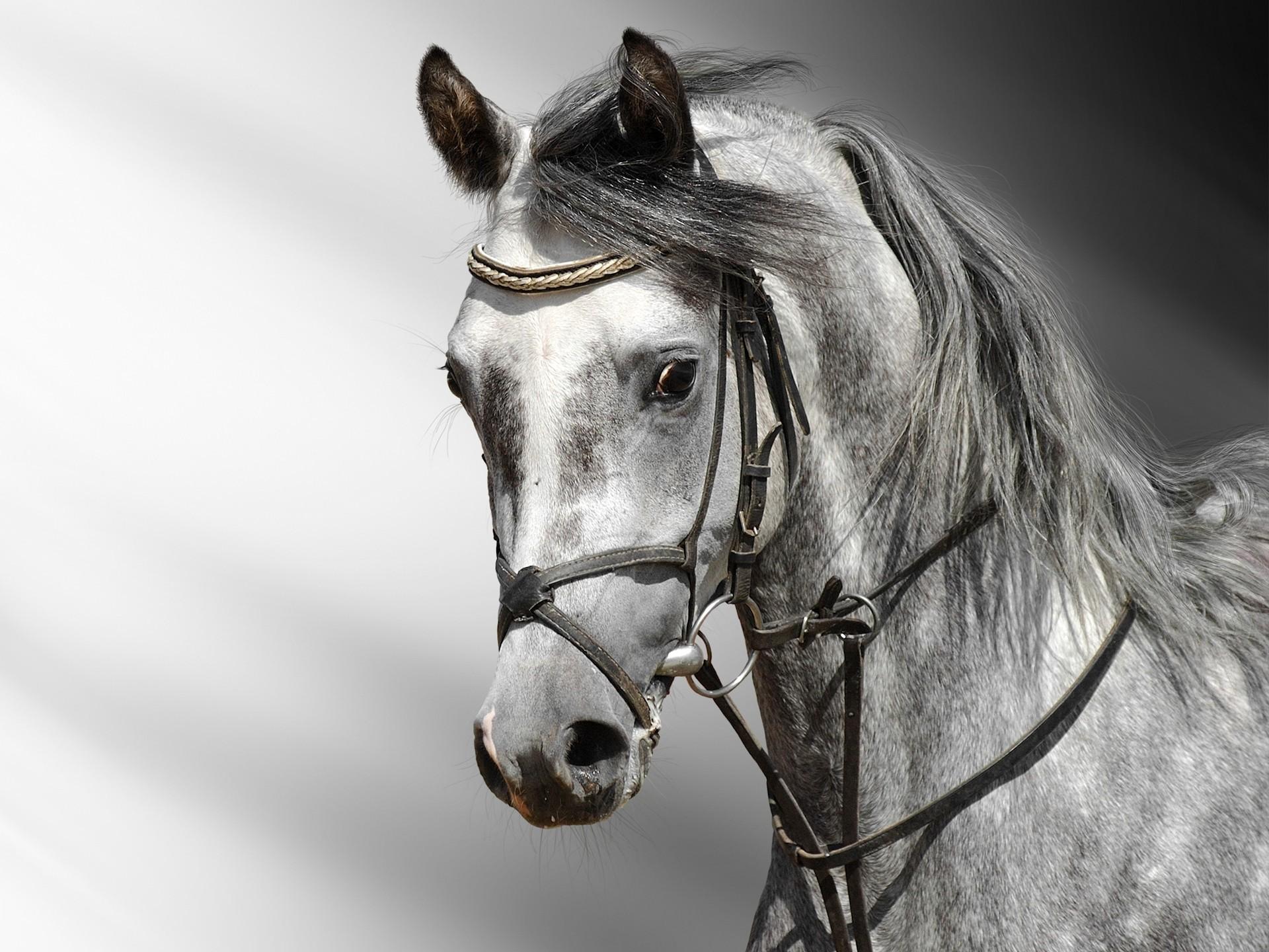 Beautiful Wallpaper High Resolution Horse - horse-wallpaper-hd-41338-42330-hd-wallpapers  Image_266843.jpg