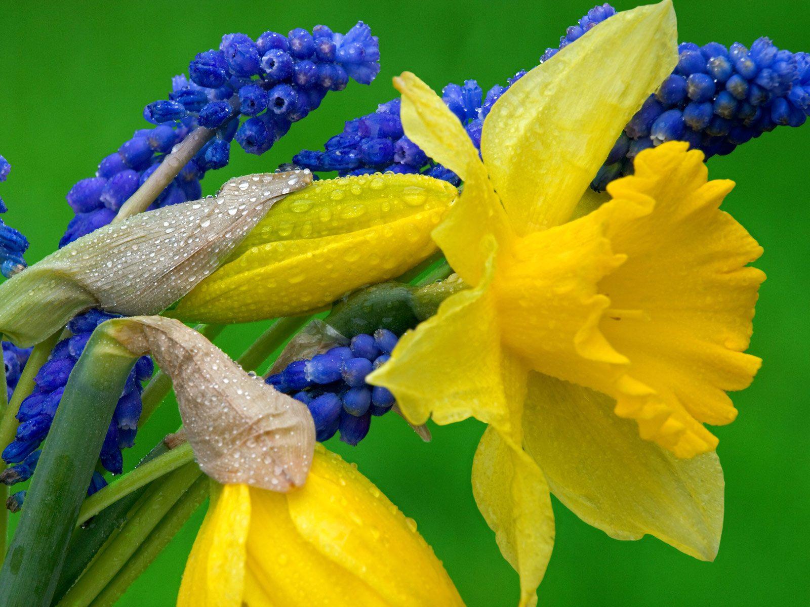 hyacinth flowers 20178