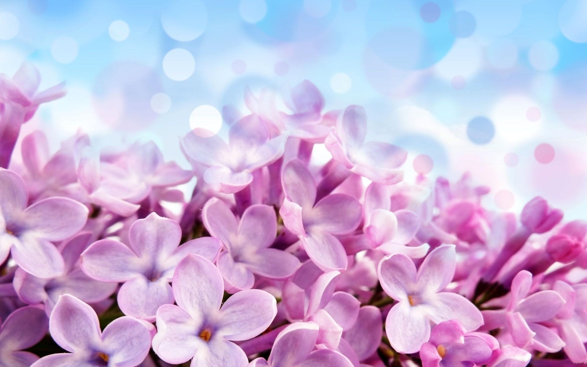 hyacinth wallpaper 20167