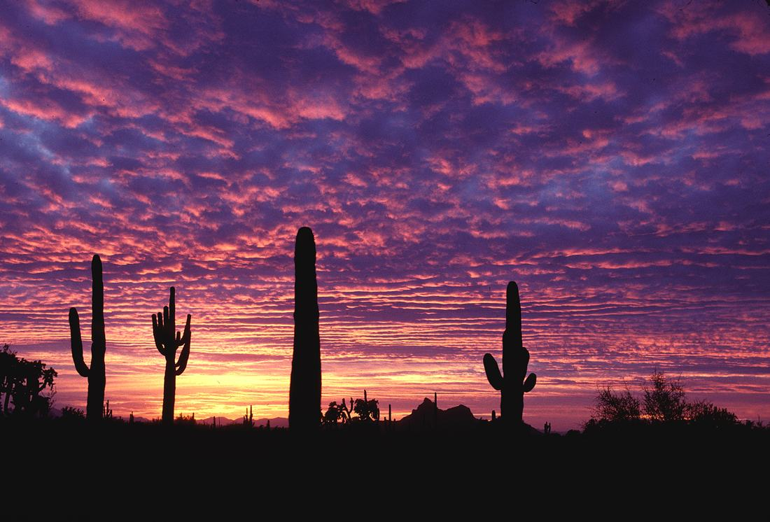 lovely arizona sunset wallpaper 30126