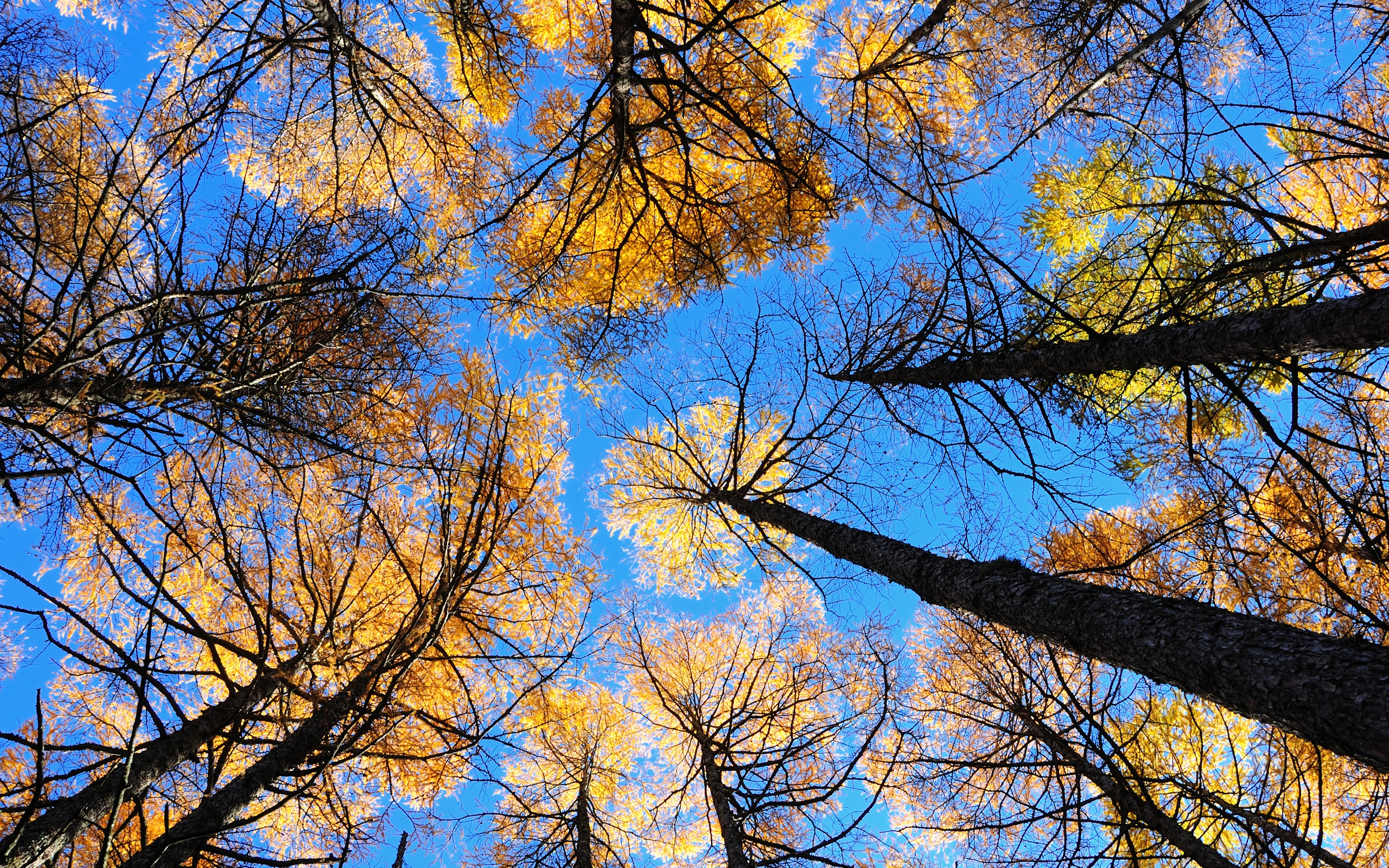 lovely looking up wallpaper 40498