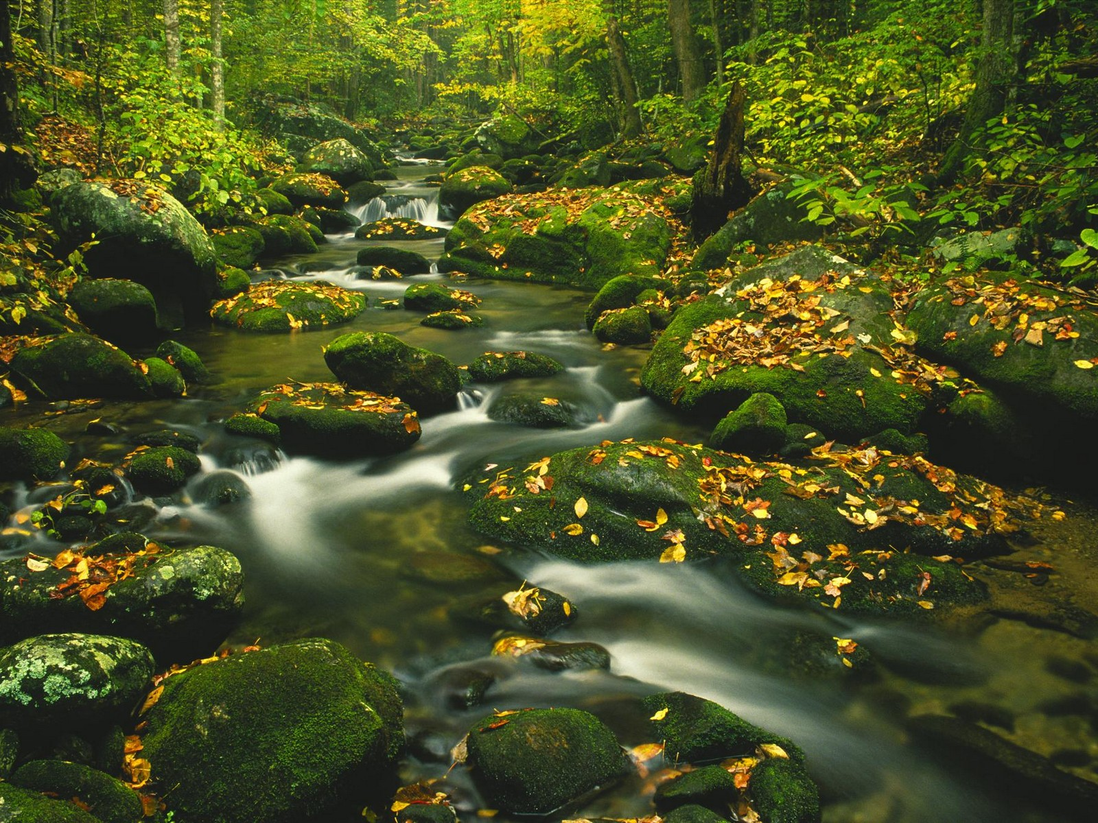 mountain stream pictures 33672