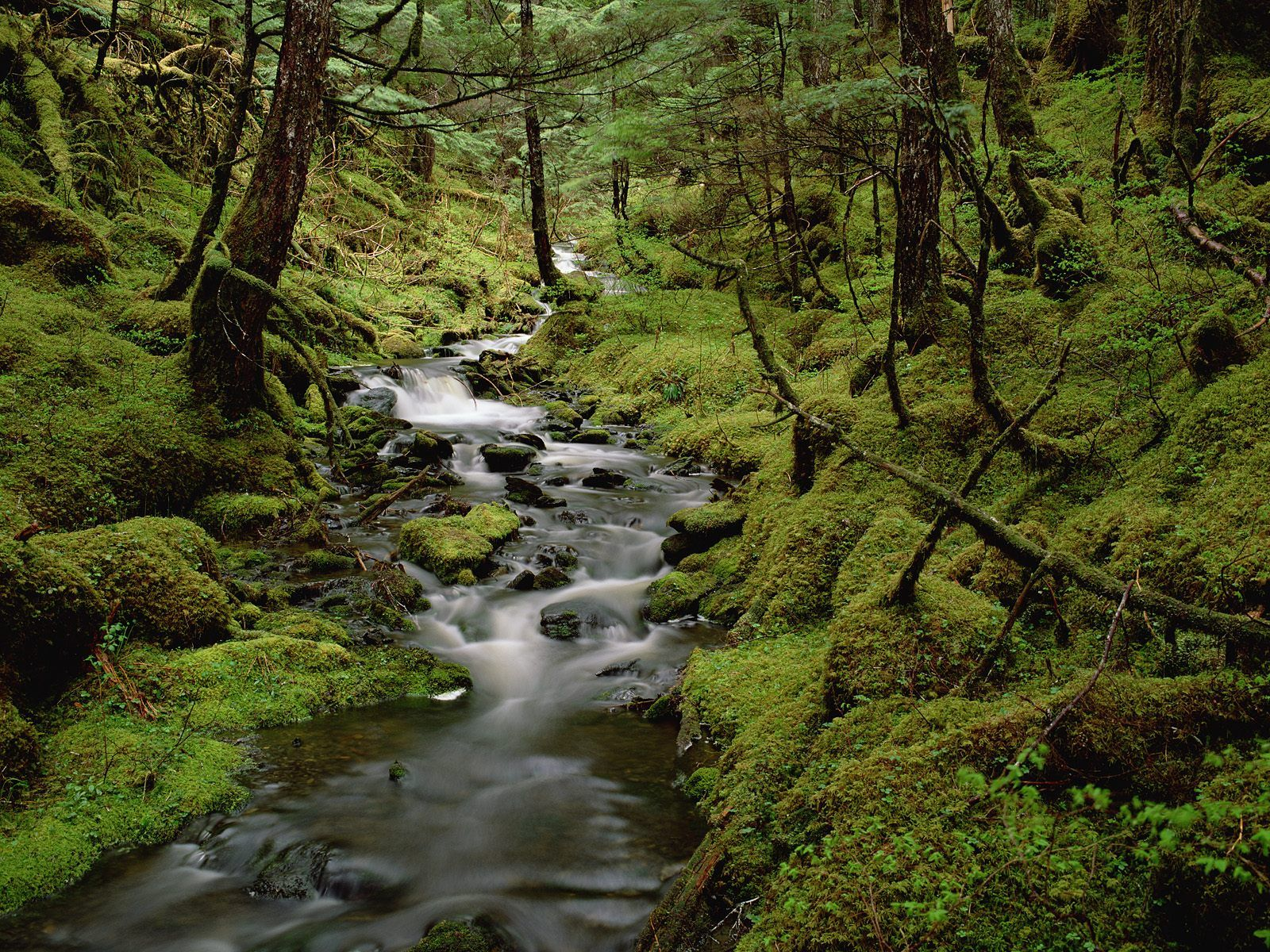 mountain stream pictures 33690