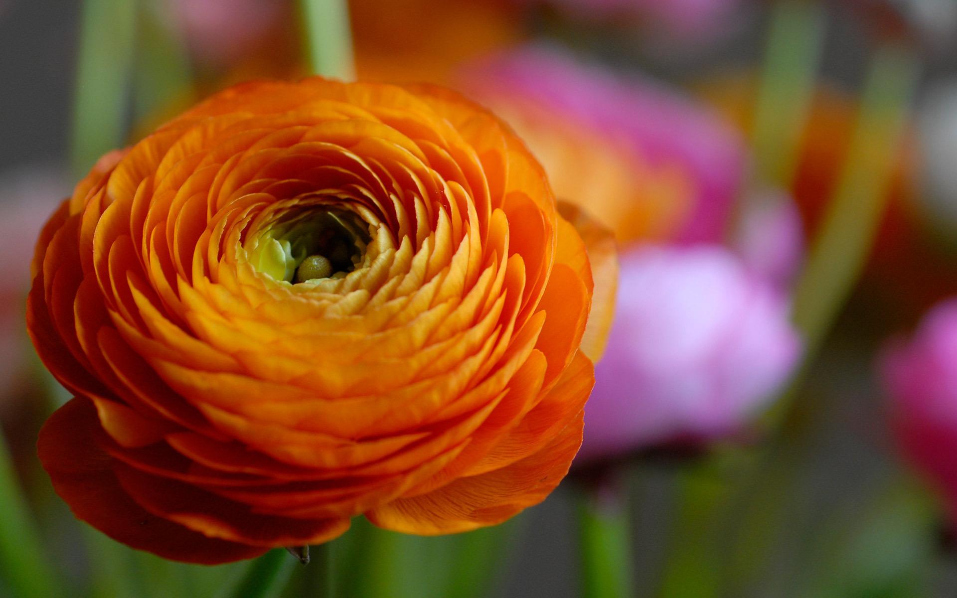 orange flower 19337