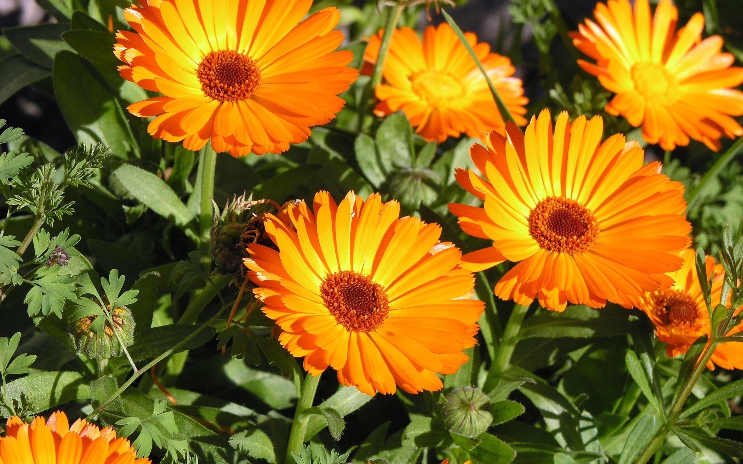 orange flowers 19352