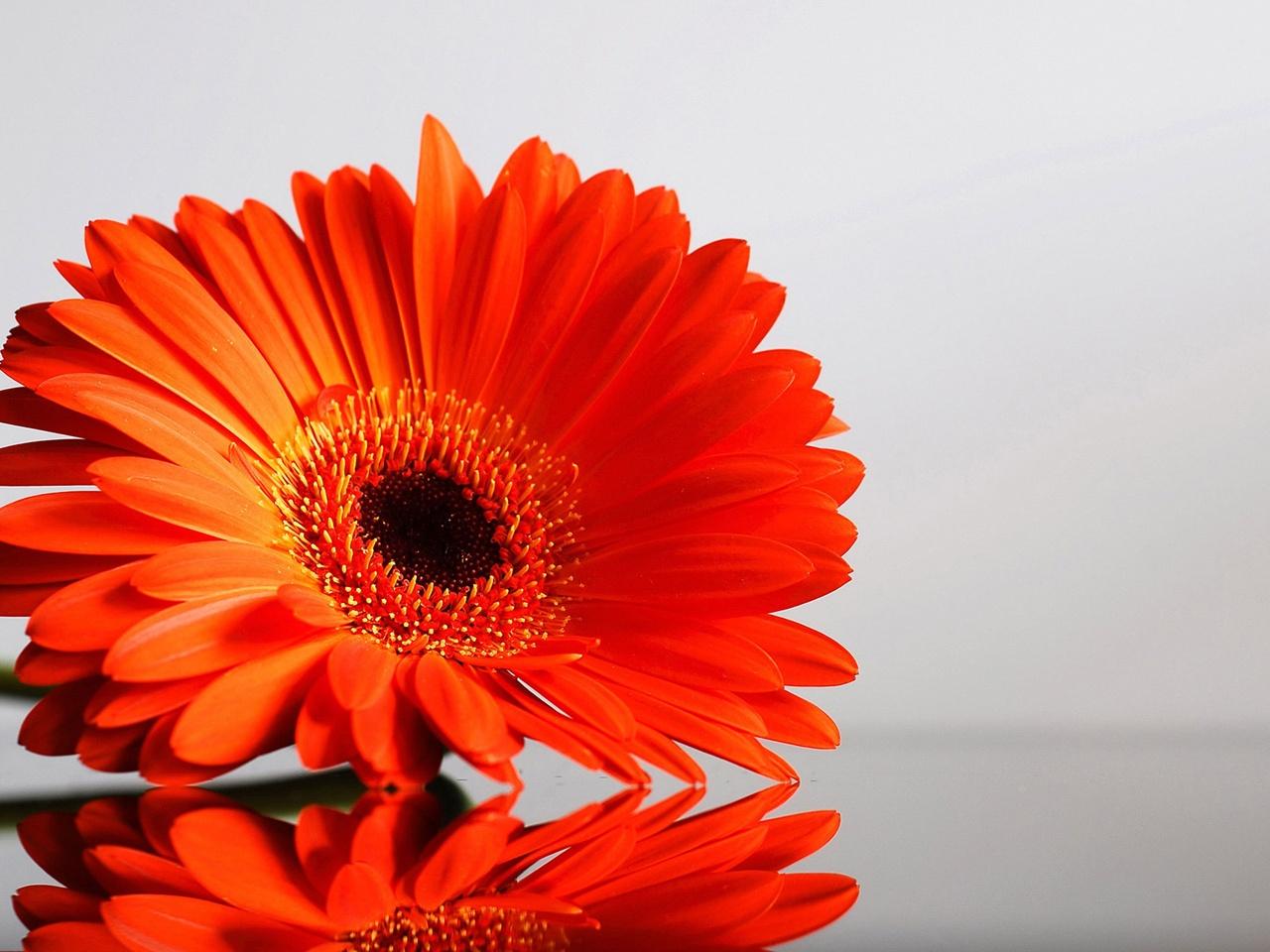 Orange Flowers 19353 1280x960 px ~ HDWallSource.com