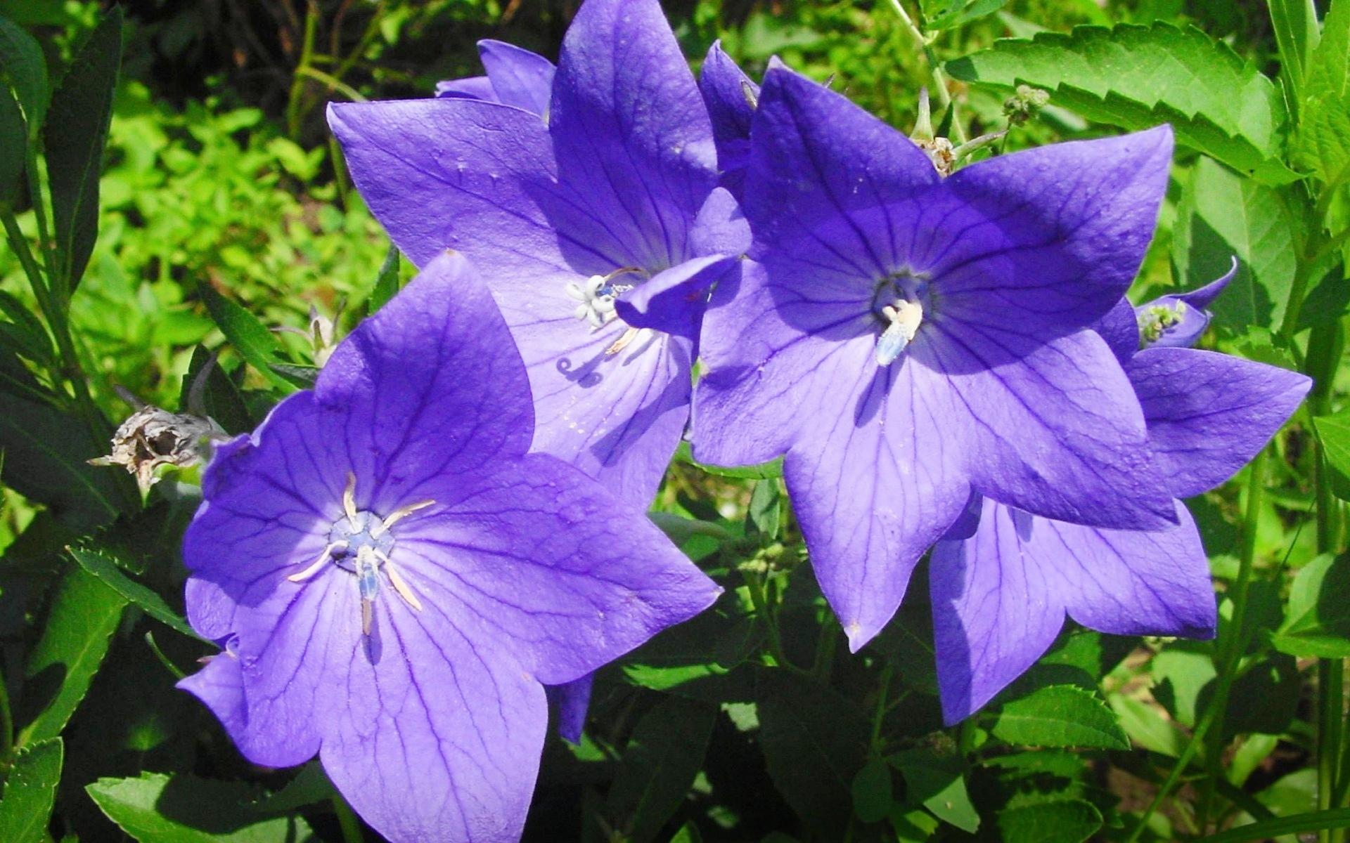 perennial flowers 14074