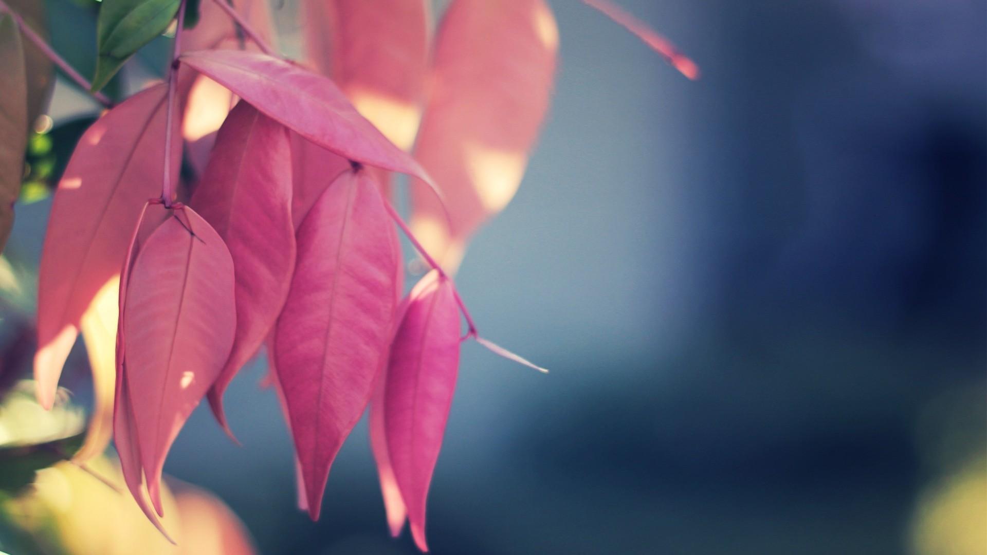 pink leaves wallpaper 18771