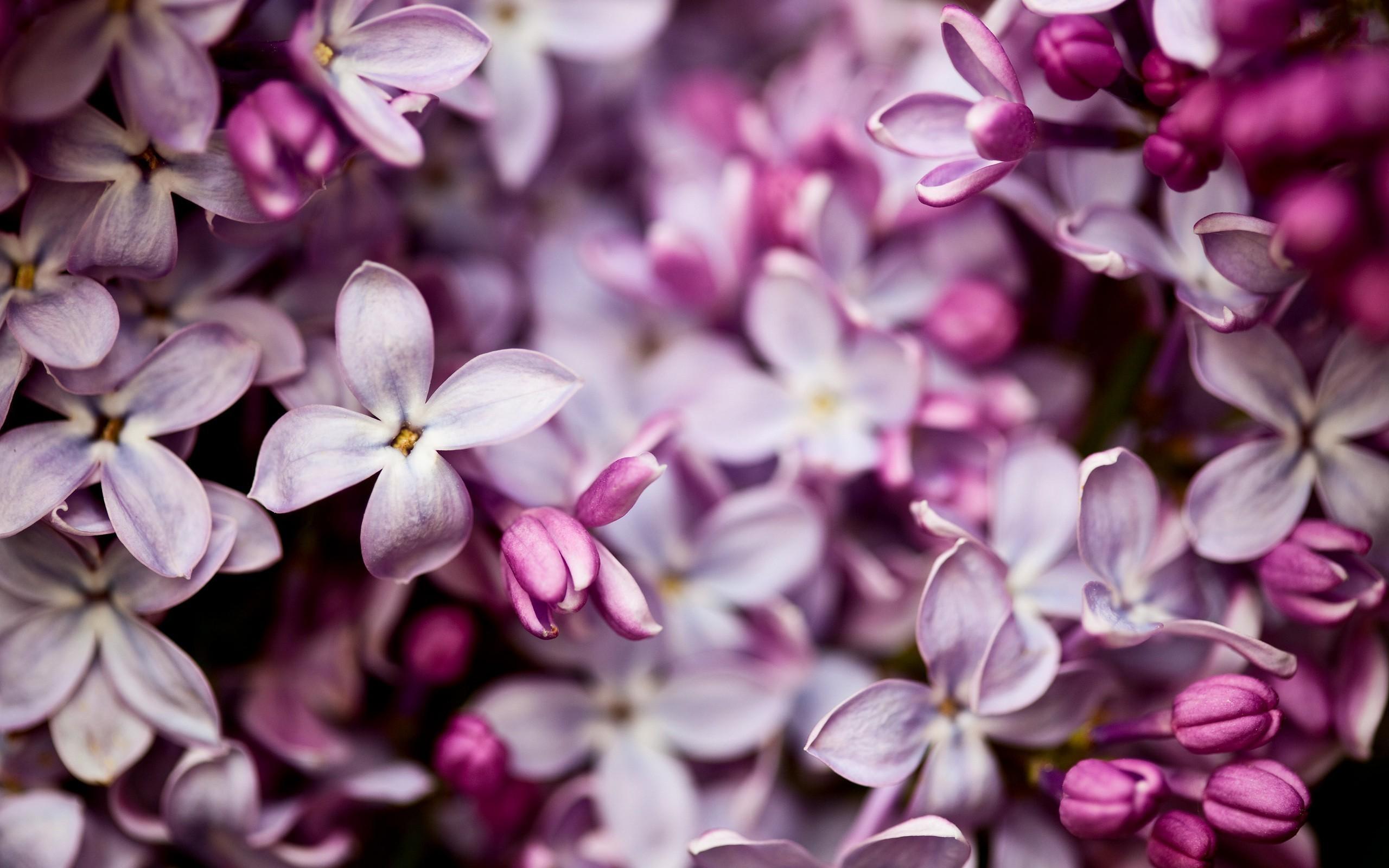 pretty lilac flowers 20202