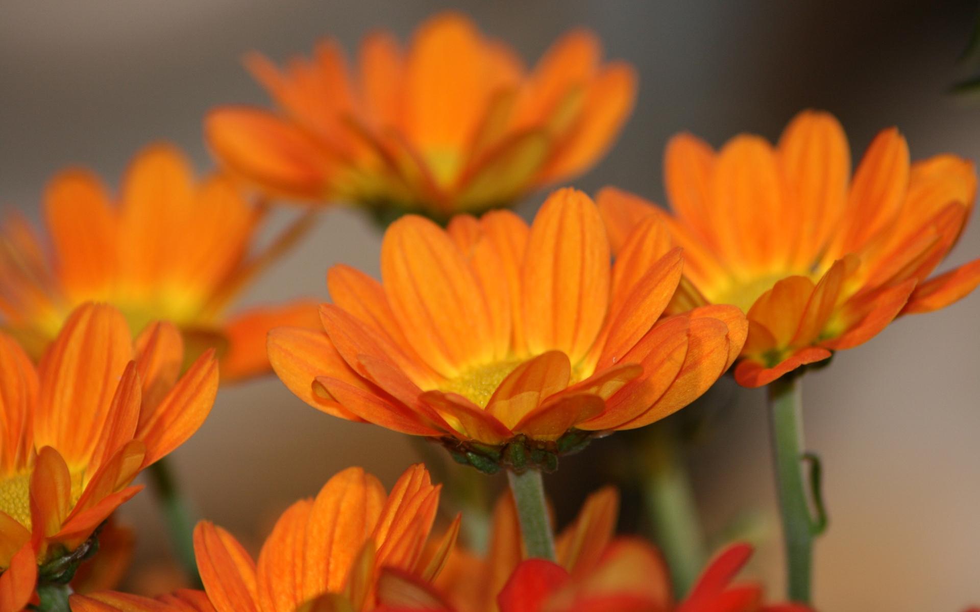 pretty orange flowers 19355
