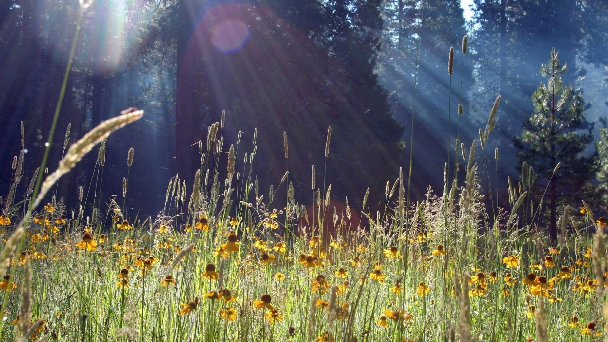цветы солнце блики  № 1247244 без смс