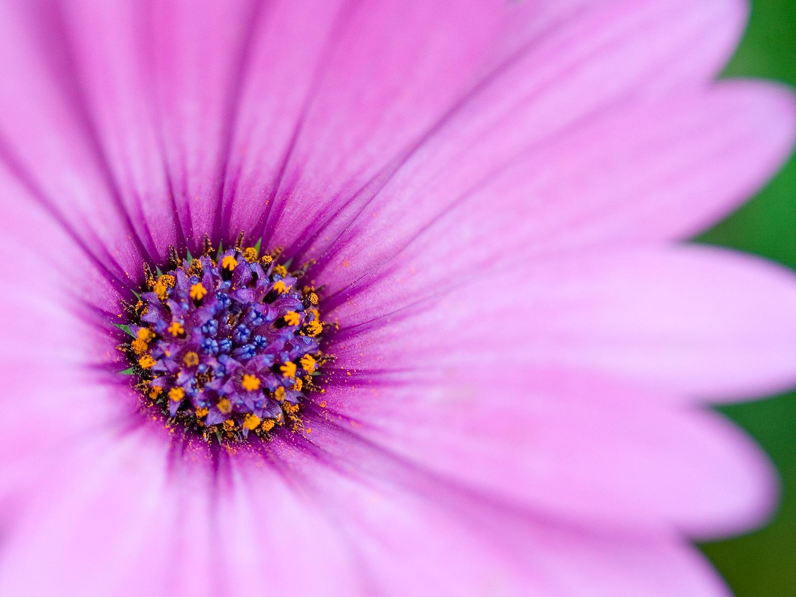 Purple Flowers 14066 1600x1200 Px HDWallSource