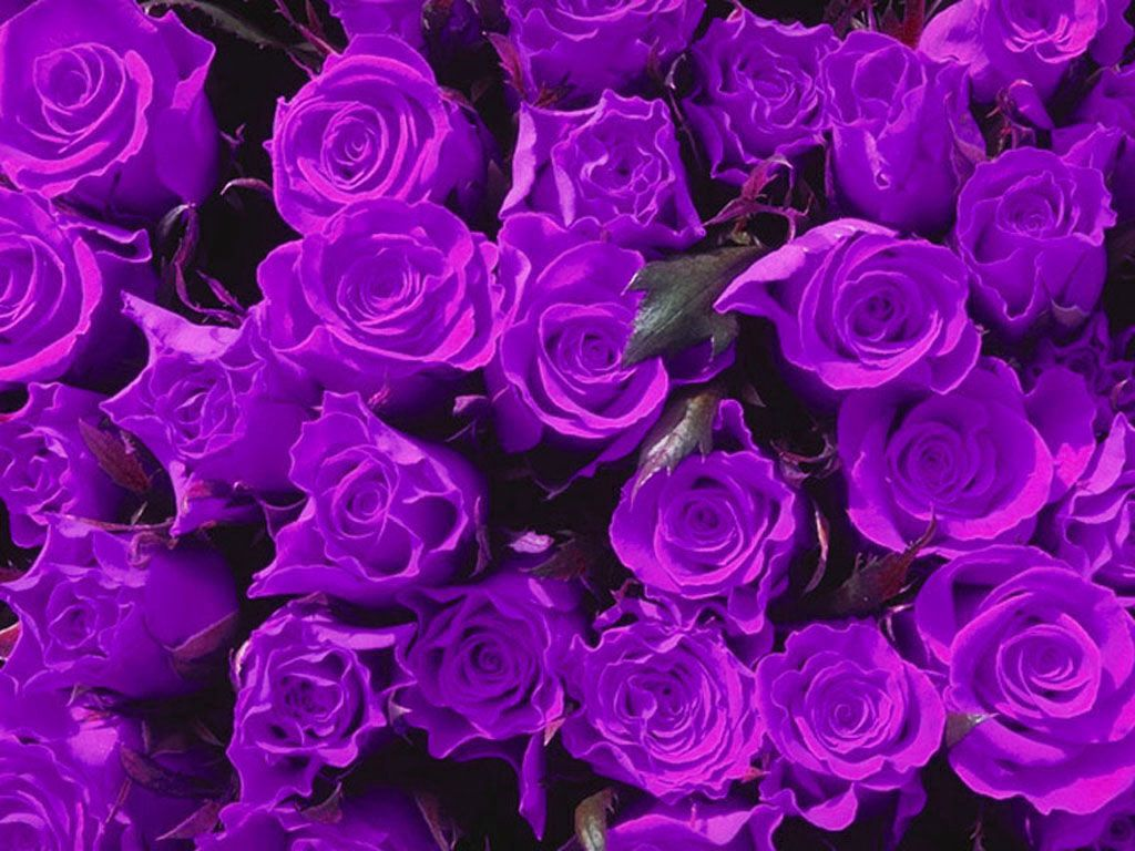 Purple Flowers 14067 1024x768 Px HDWallSource