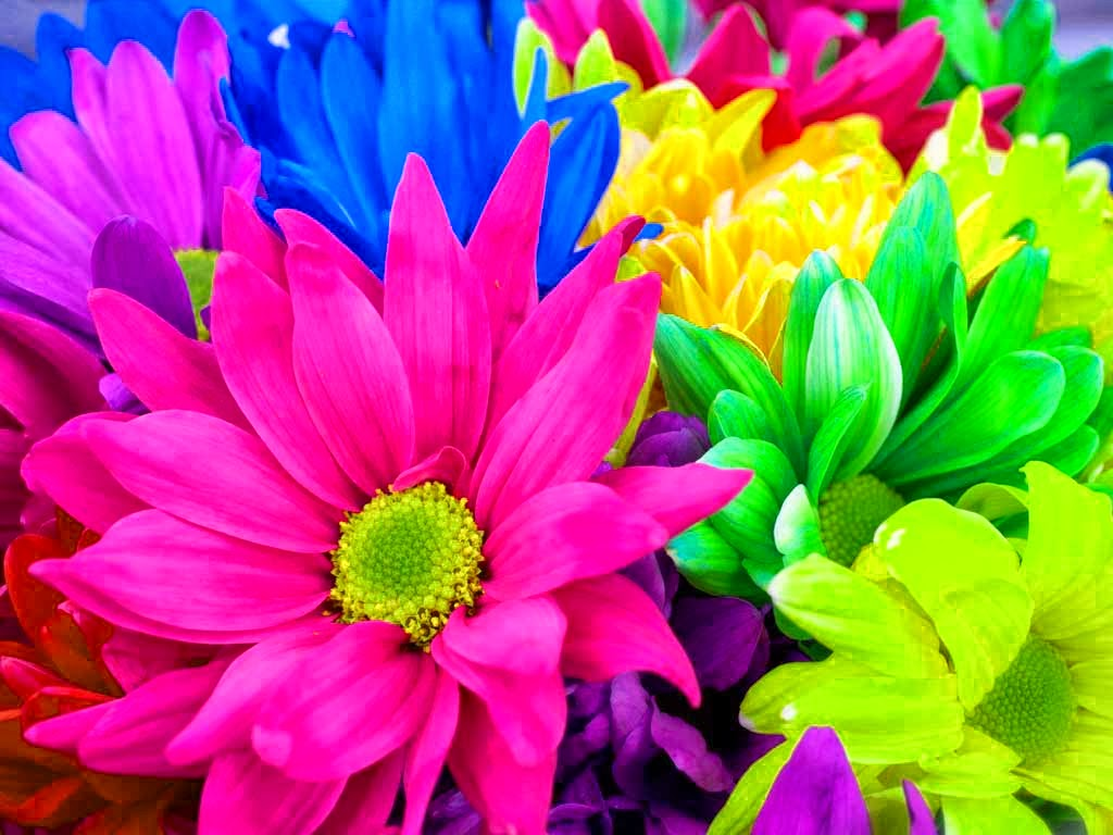rainbow flowers 17370