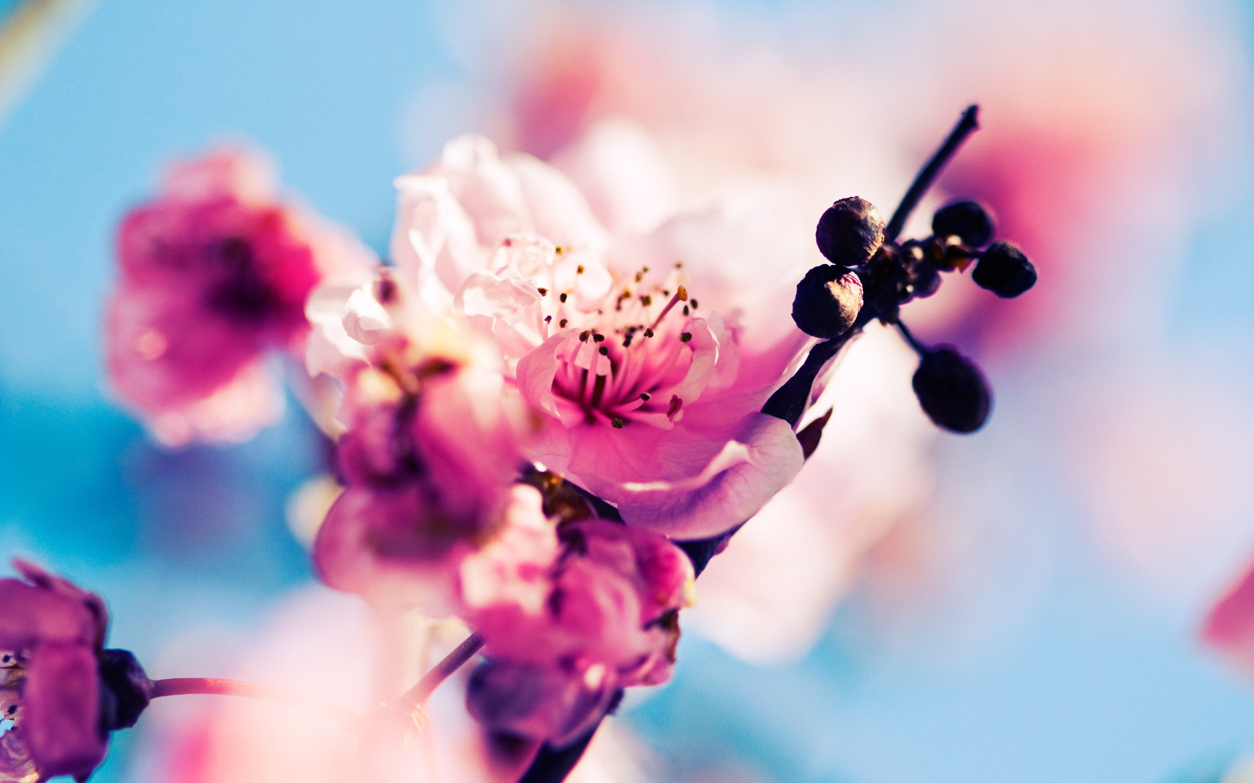 Sakura Wallpaper A Low Angle Shot Of White Cherry Blossom