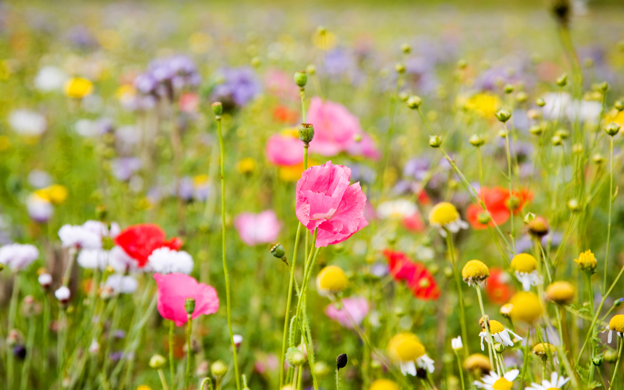 spring meadow wallpaper 32096