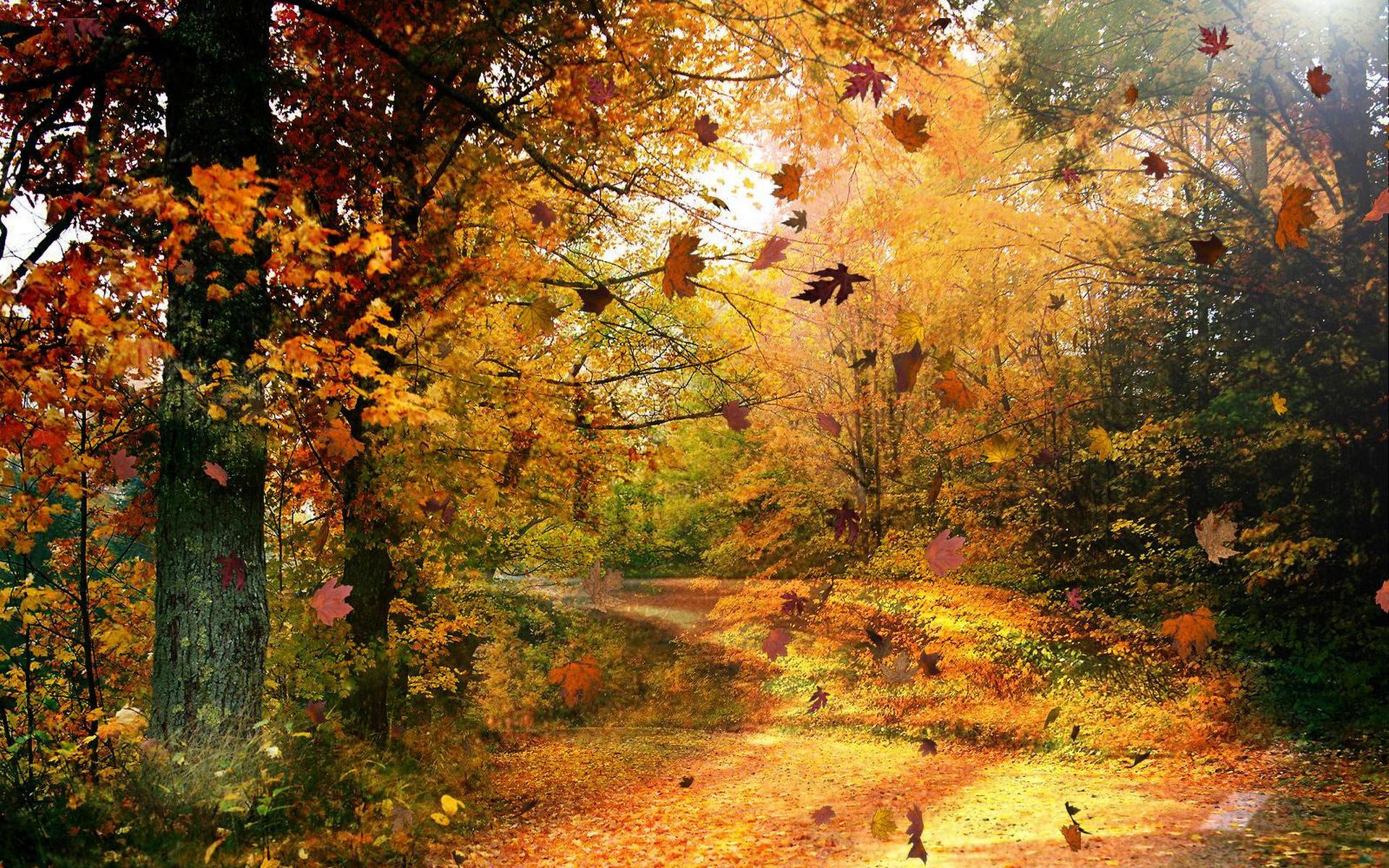 stunning fall scenery 18765