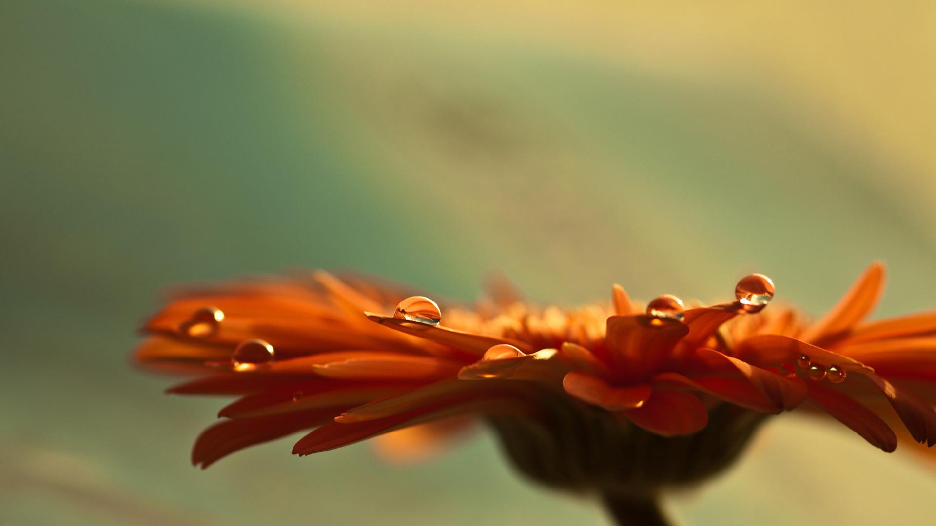 stunning orange flower 19342