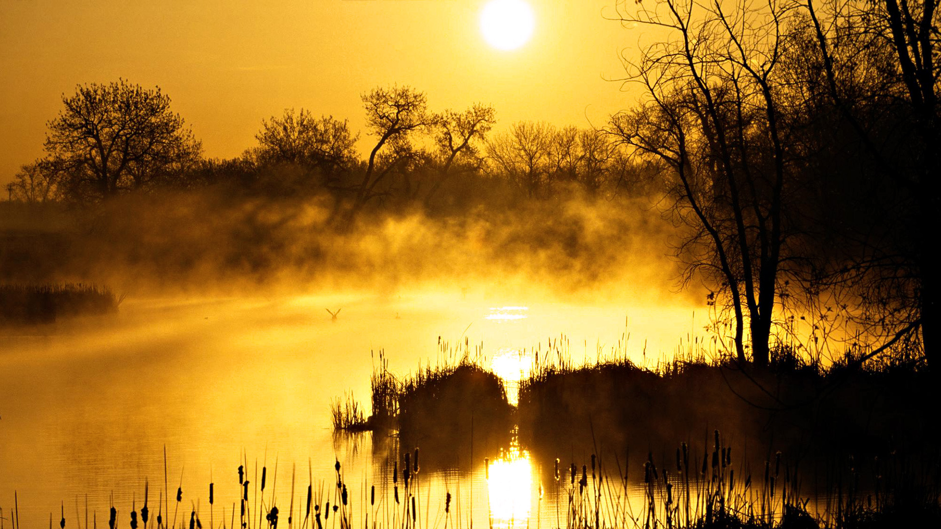 sunset yellow 25599