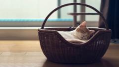 Adorable Cat Rest Wallpaper 43865