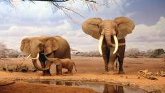 Africa Elephants Wallpaper 24453