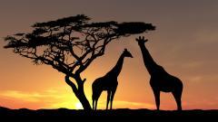 Africa Wallpaper 24455