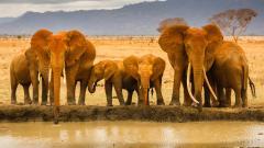 Africa Wallpaper HD 24466
