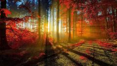 Amazing Woods Wallpaper 20372