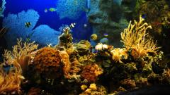 Aquarium Backgrounds 19002