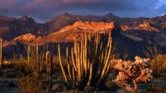 Arizona Sunset 30135