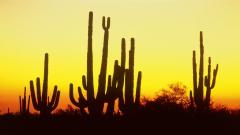 Arizona Sunset Pictures 30132