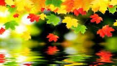 Autumn Wallpaper 13840