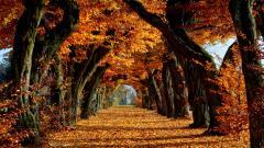 Autumn Wallpaper 13842