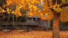 Autumn Wallpaper 13843