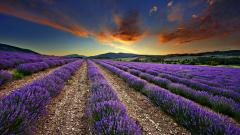 Awesome Field Wallpaper 31085
