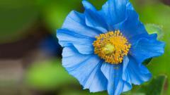 Beautiful Blue Flower 14086