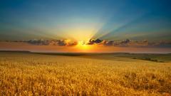 Beautiful Sun Wallpaper 22635