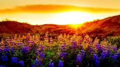 Beautiful Sunset 15295