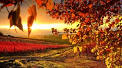 Beautiful Vineyard Wallpaper 26362